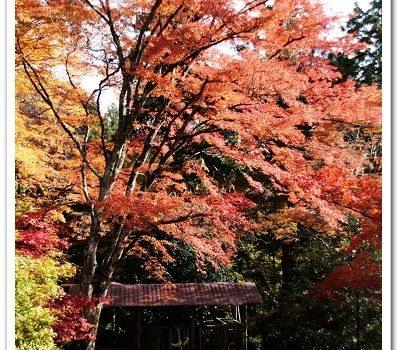 [2007 楓京都] 從秋天的京都,回來了