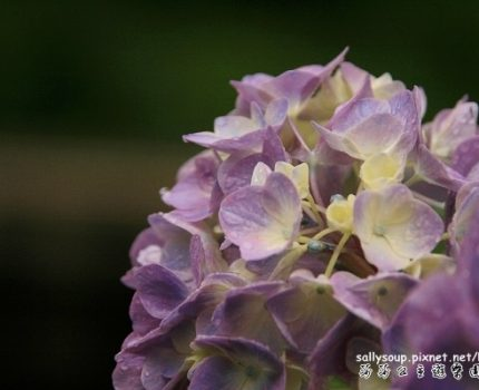 [艷夏京都] 夏天的京都有...