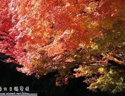 [2007 楓京都] 東福寺.偽門外漢