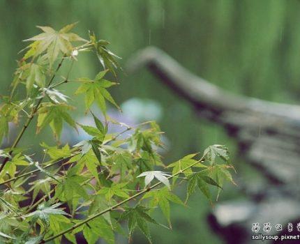蘇州上海.五天散步行程