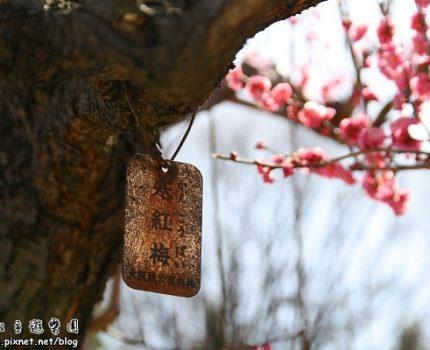 [旅行地圖] 梅花綻放在大阪城公園