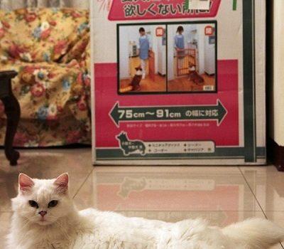 [買物] IRIS木製寵物柵欄