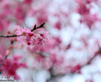 [台北小旅行] 大年初六.陽明公園賞花