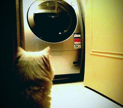 [敗家] 新來的阿信.Panasonic NA-V158UDH 滾筒式洗衣乾衣機