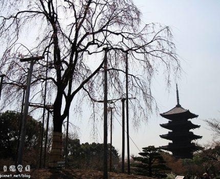 [旅行.花見京阪奈] 京都.春之東寺 (上)