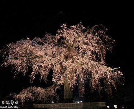 [旅行地圖] 京都.圓山公園的粉紅夜色