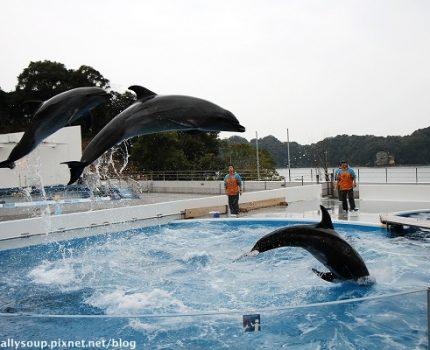 [身心放鬆九州之旅] 長崎。佐世保的九十九島水族館。療癒系的海豚表演