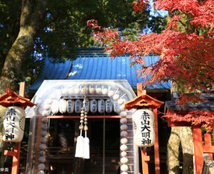 京都楓情。偽八天賞楓行程