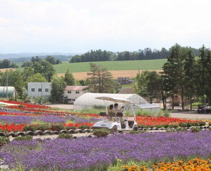[北海道夏之旅] 美瑛。亞斗夢之丘(ぜるぶの丘)。賞花的第一站