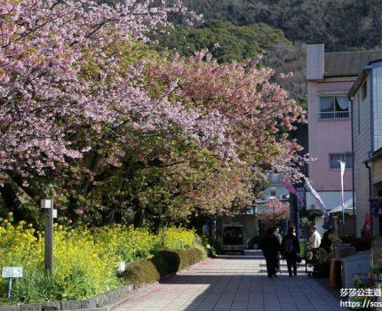 2019東京伊豆小旅行。7日散步行程