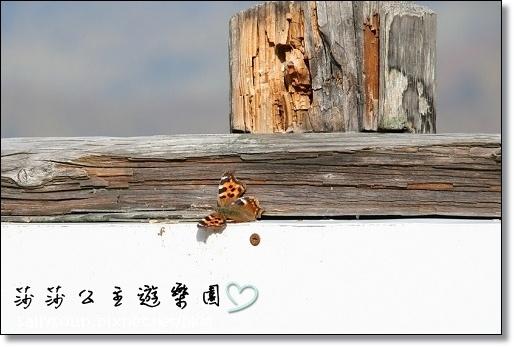063 有蝴蝶