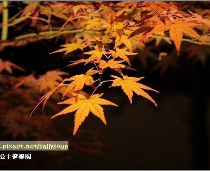 [2007 楓京都] 永觀堂.好難拍的夜楓 (上)
