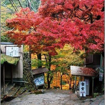 [2007 楓京都] 去京都的高雄.賞美麗的楓