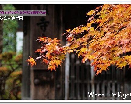 [2007 楓京都] 神護寺。雨中賞楓別有滋味
