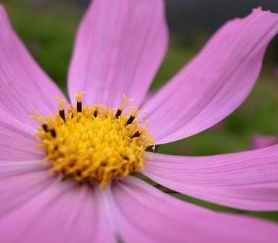 [漫步花蓮] 鳳林。巧遇花東花海季