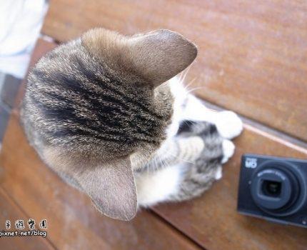 [漫步花蓮] 芭崎瞭望台的那隻貓