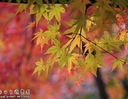 [2007 楓京都] 嵐山.天龍寺外亂逛一圈