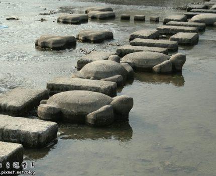 [一人京都] 鴨川的龜龜