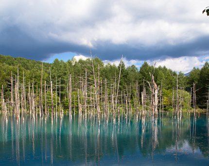 [北海道夏之旅] 美瑛。青池。傳說中的夢幻仙境